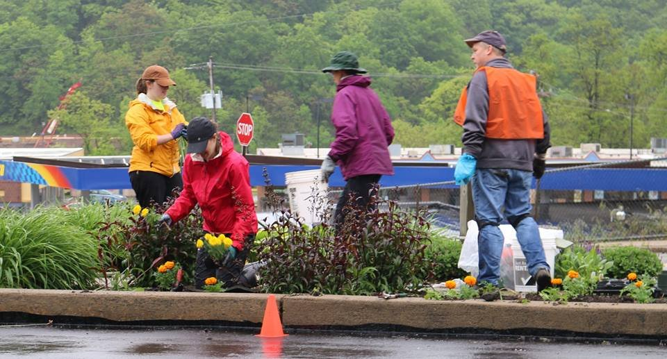 Volunteers plant the Ronald Street island, 21 May 2016